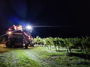 Weinlese 2020 | Kein Weingarten am 20.09.2020